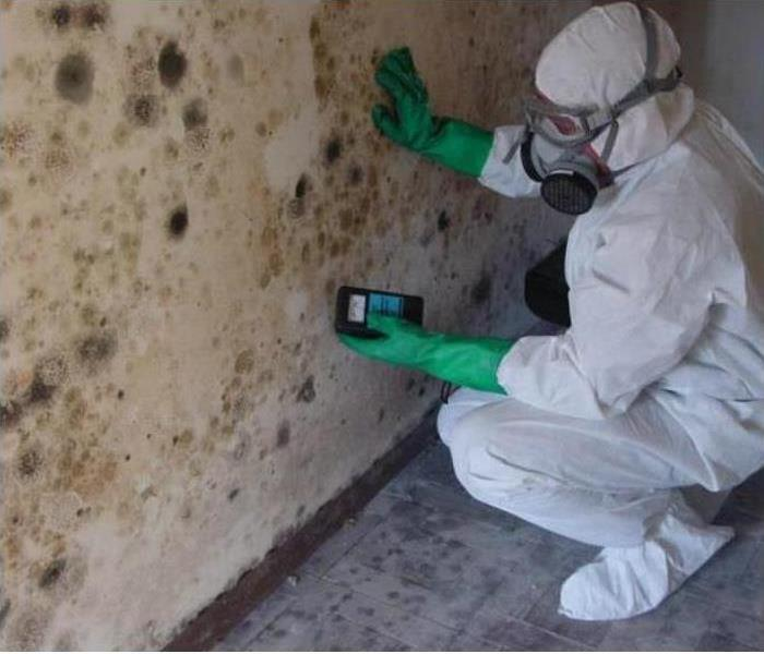 Mold in Your Commercial Property?